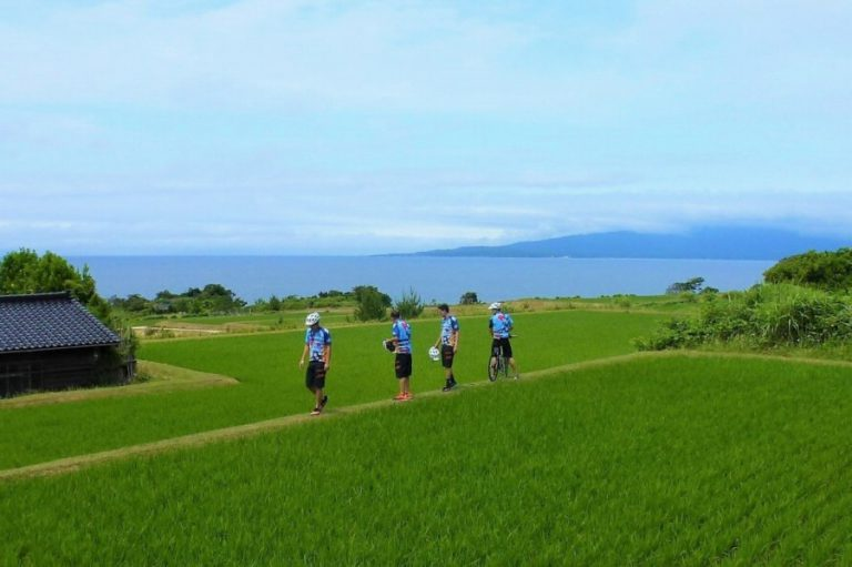 Sado Island rice field