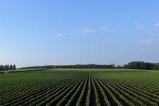 Hokkaido cycling farm field