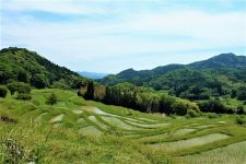 Minamiboso bike tour oyama terraced rice paddies