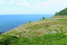 Noto terraced rice paddies
