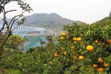 Shimanami orange
