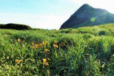 sado island wild lily